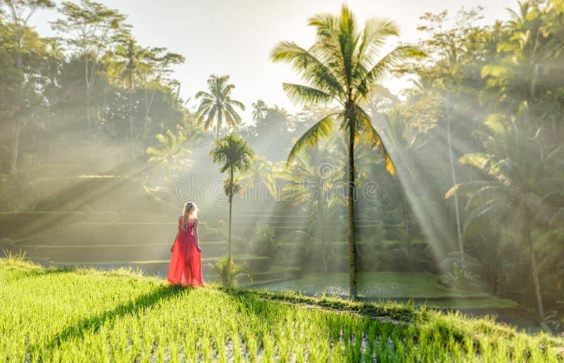 Härlig modell i röd klänning på Tegalalang risterrass 4 fotografering för bildbyråer