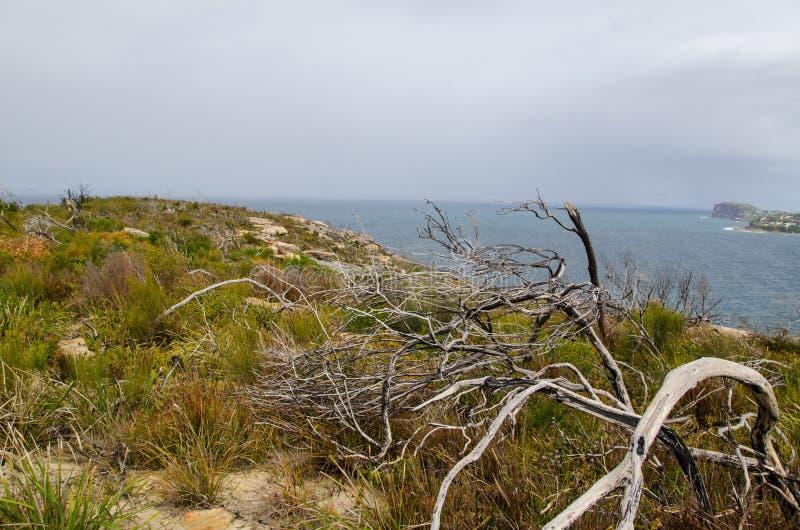 Härlig molnig himmel med den mörka havsikten uppifrån av berget på Palm Beach, Sydney, Australien arkivbild