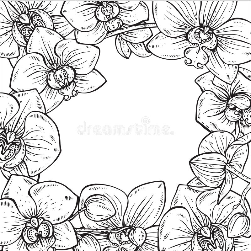 Härlig monokrom blom- ram med orkidéblommor vektor illustrationer