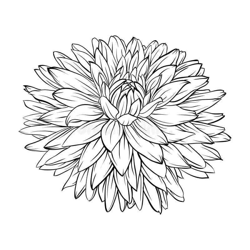 Härlig monokrom, svartvit isolerad dahliablomma Hand-drog konturlinjer och slaglängder stock illustrationer