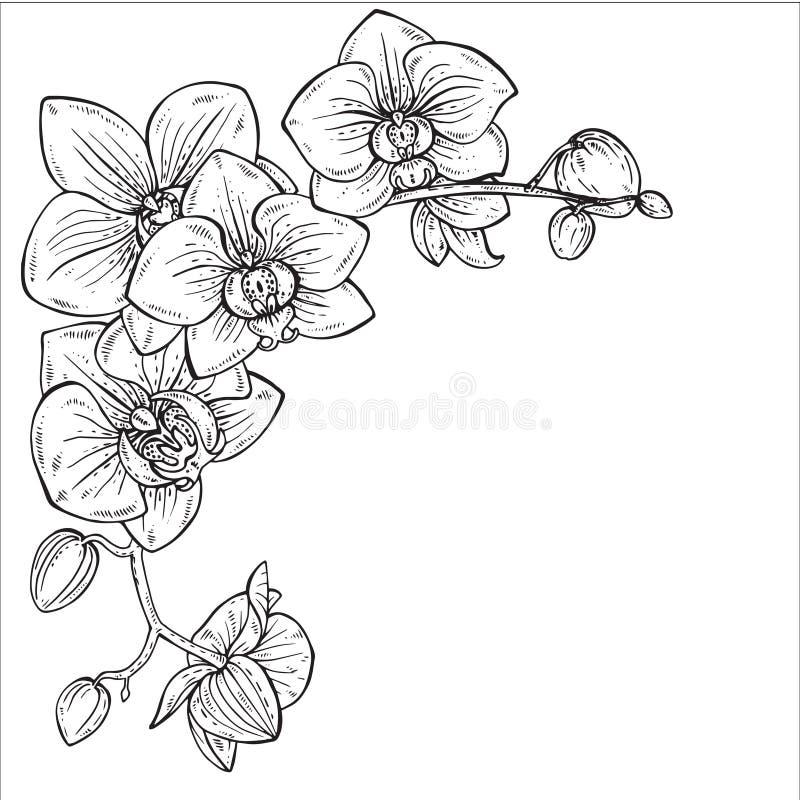 Härlig monokrom vektorillustration med orkidéfilialer royaltyfri illustrationer