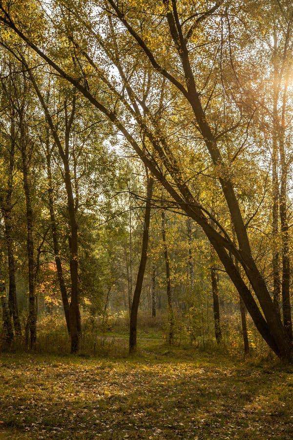 Download Härlig morgon arkivfoto. Bild av tidigt, färgrikt, soligt - 27284838