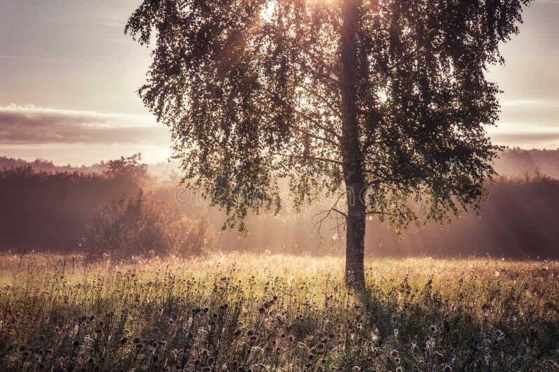 Härlig morgon i skogen arkivbild