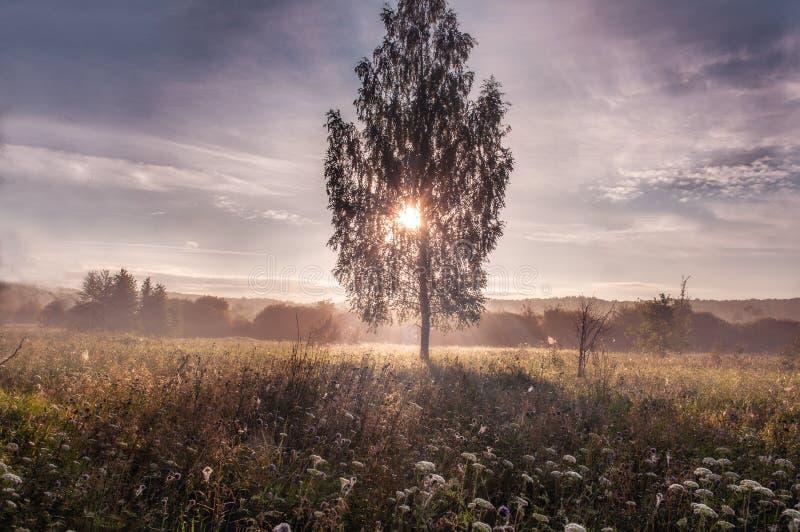 Härlig morgon i skogen fotografering för bildbyråer