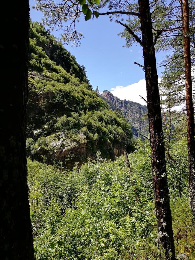 Härlig moutain för naturträdblommor fotografering för bildbyråer