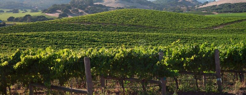 Härlig Napa County vingård royaltyfri foto
