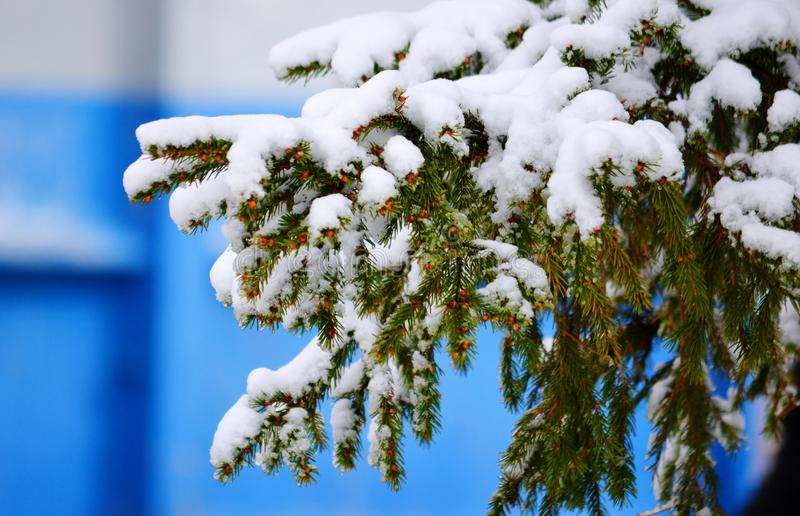 Härlig natur Altaya royaltyfria bilder