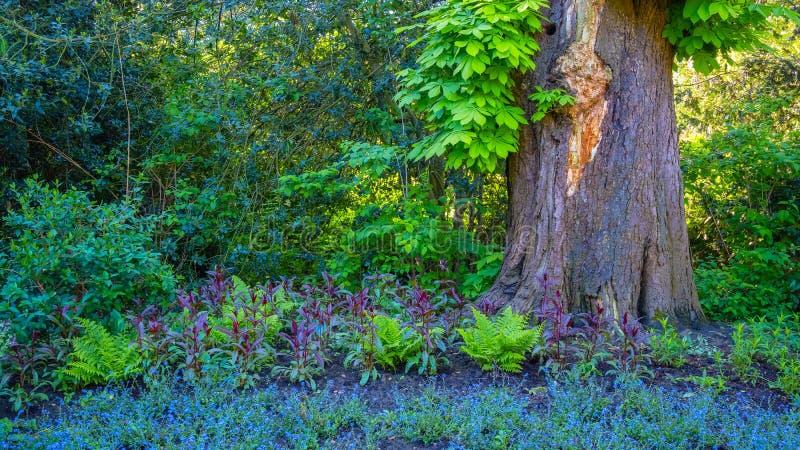 Härlig natur på Kensington trädgårdar i London royaltyfri bild