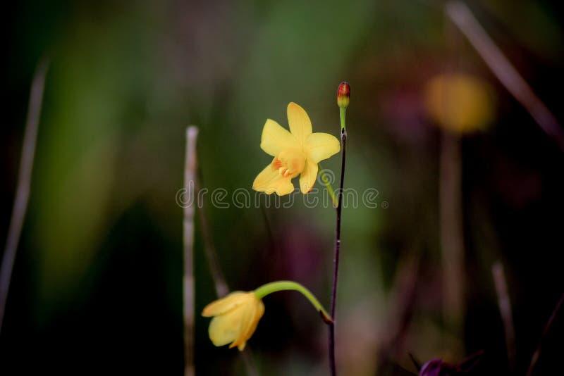 Härlig natur på Non sonblommafältet (Tung Salaeng Luang Nation Park) arkivfoton