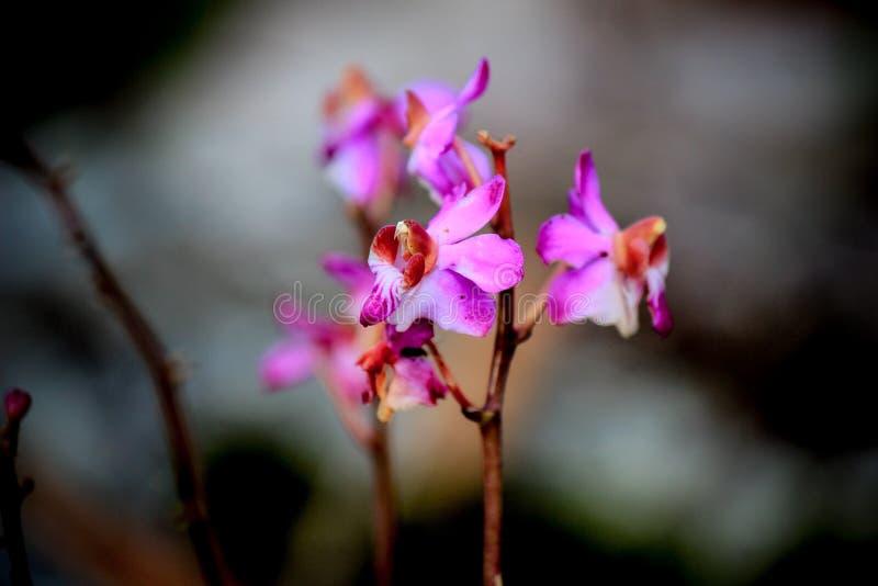 Härlig natur på Non sonblommafältet (Tung Salaeng Luang Nation Park) royaltyfri foto
