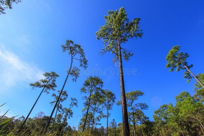 Härlig natur på Non sonblommafältet (Tung Salaeng Luang Nation Park) arkivfoto