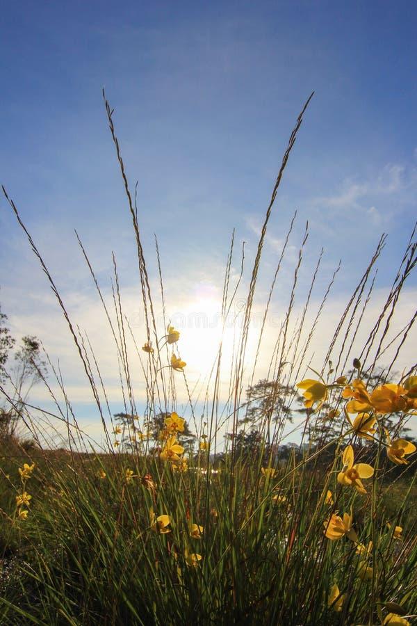 Härlig natur på Non sonblommafältet (Tung Salaeng Luang Nation Park) royaltyfria foton