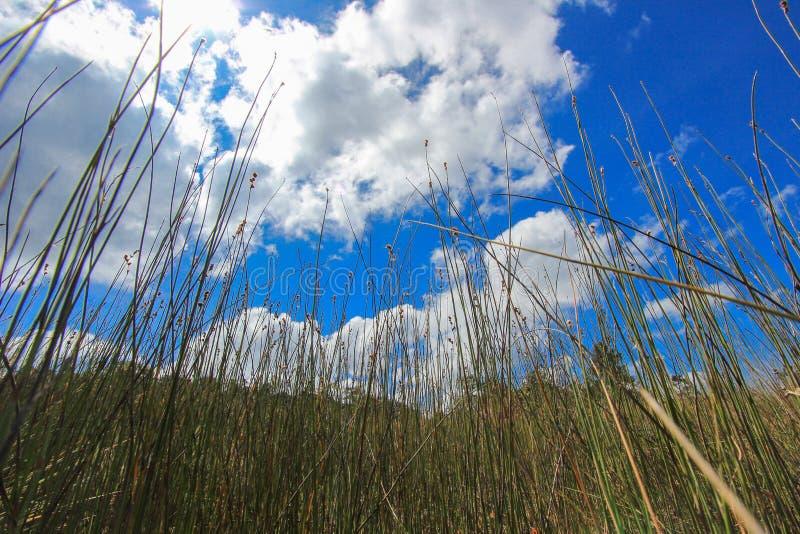 Härlig natur på Non sonblommafältet (Tung Salaeng Luang Nation Park) royaltyfri fotografi