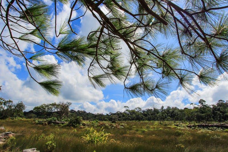 Härlig natur på Non sonblommafältet (Tung Salaeng Luang Nation Park) royaltyfri bild