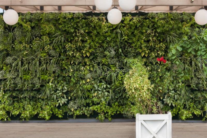 Härlig naturbakgrund av den vertikala trädgården med tropiska gröna plantera blad med blommafyrkantträkrukan arkivbilder