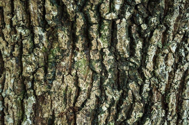 Härlig naturgrunge och smutsigt trä Textur av stambruk som arkivfoton