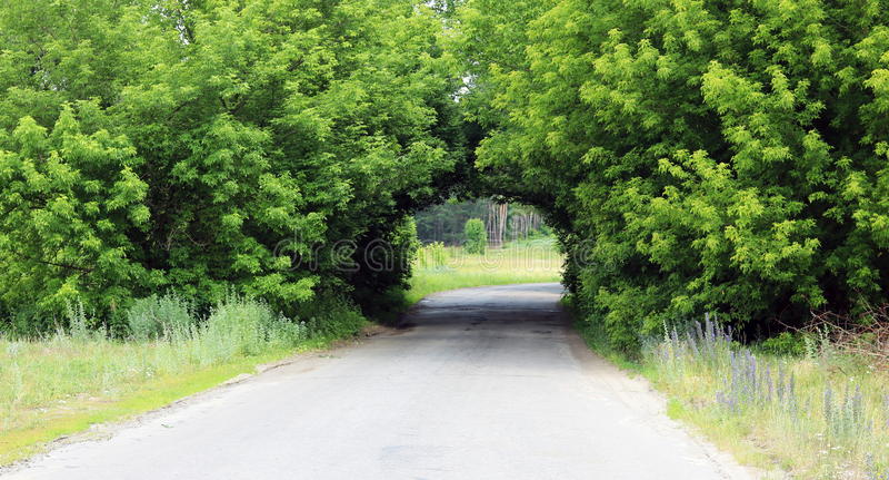 Härlig naturlig båge som är liknande till tunnelen, över den lantliga vägen i sommar i bra väder royaltyfri fotografi