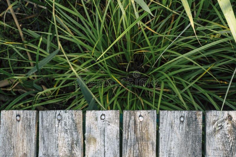 Härlig naturlig bakgrund med grönt gräs och träplankor royaltyfri fotografi
