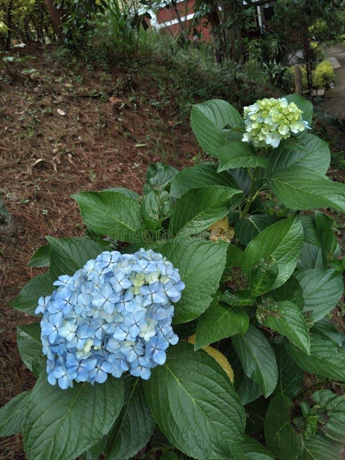 Härlig naturlig blomma som finnas i bergregion av Nagaland arkivfoto