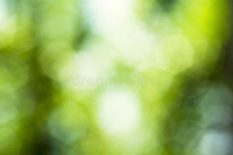 Härlig naturlig bokeh med ljus solljusbakgrund royaltyfria bilder