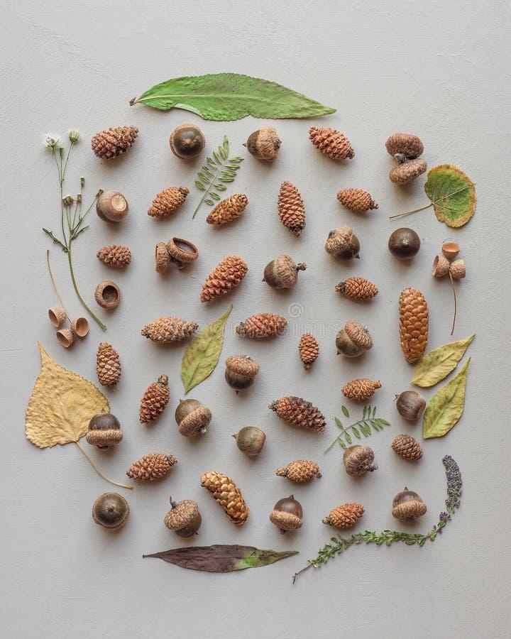 Härlig naturlig samling av olika typer av pinecones och ekollonar med en lövrik ram royaltyfri fotografi