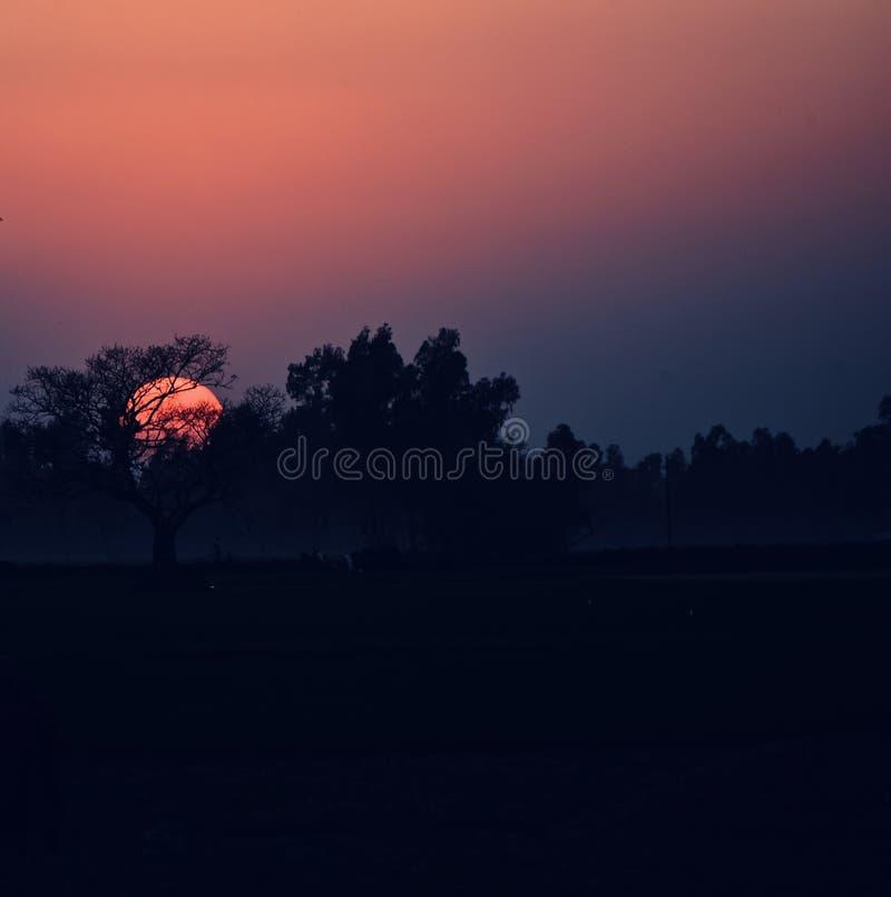 Härlig naturlig solnedgång med det mörka trädbakgrundsfotoet arkivfoton