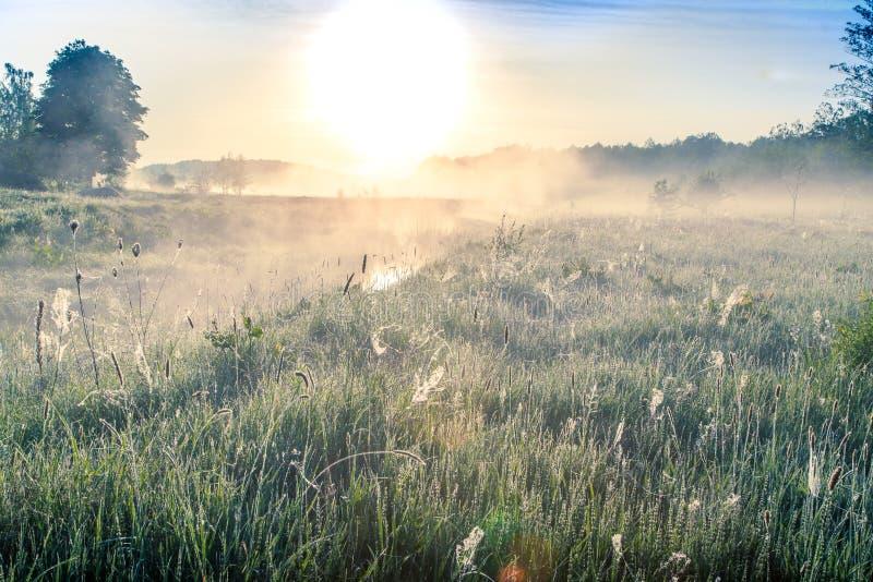 Härlig naturlig sommarbakgrund Gryning med mist över floden arkivbild