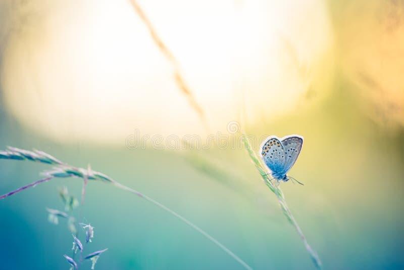Härlig naturnärbild, sommarblommor och fjäril under solljus Lugna naturbakgrund royaltyfri bild
