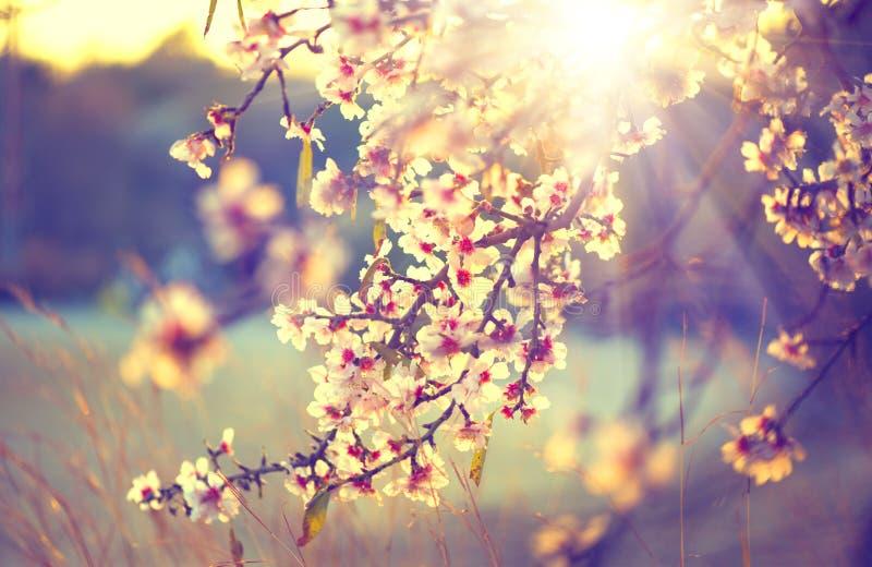 Härlig naturplats med det blommande trädet royaltyfri bild