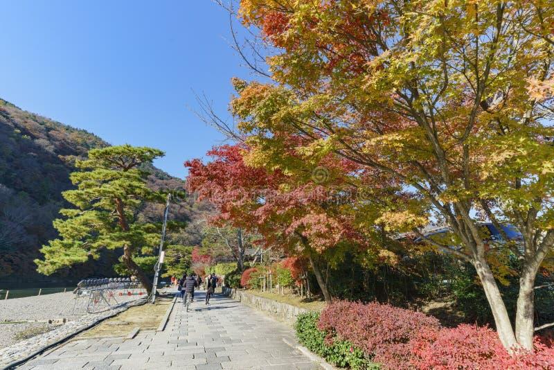 Härlig nedgångfärg i Arashiyama royaltyfri foto