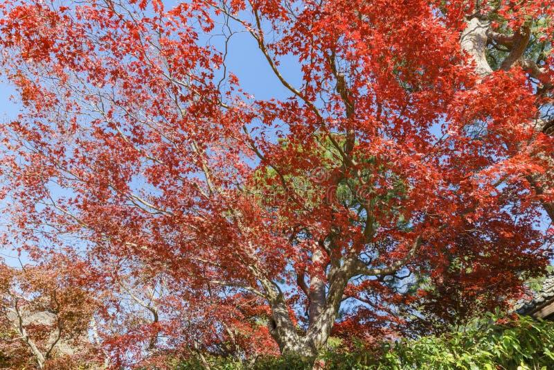 Härlig nedgångfärg i Arashiyama royaltyfria bilder
