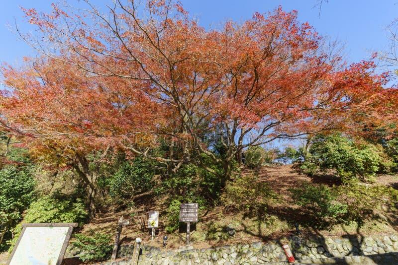 Härlig nedgångfärg i Arashiyama arkivbilder