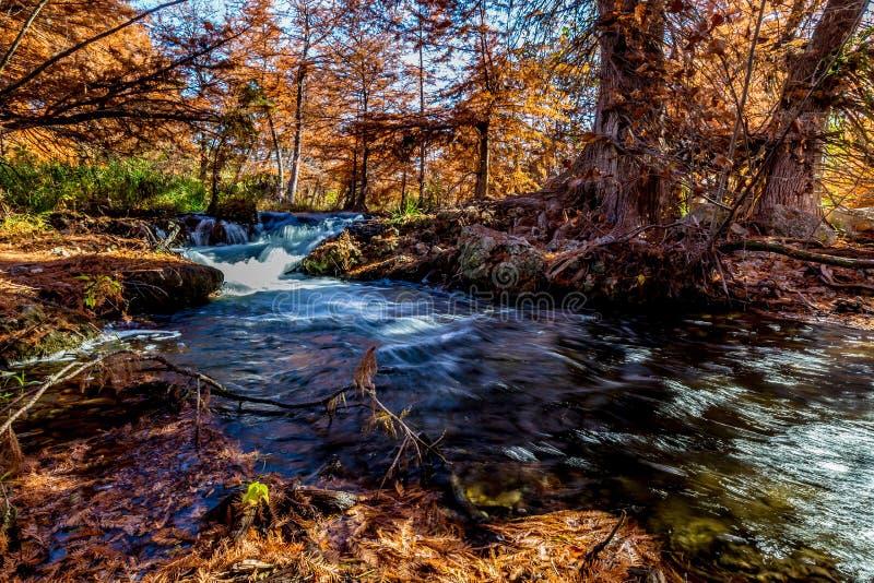 Härlig nedgånglövverk på Guadalupe River, Texas royaltyfri foto