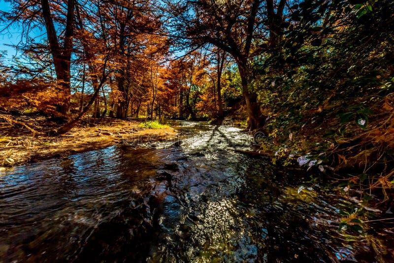 Härlig nedgånglövverk på Guadalupe River, Texas fotografering för bildbyråer