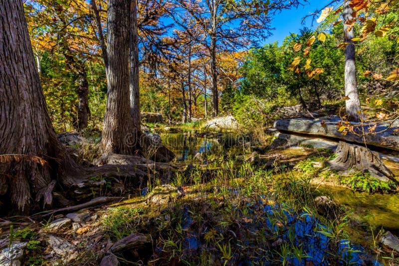 Härlig nedgånglövverk på Hamilton Creek, Texas arkivbild
