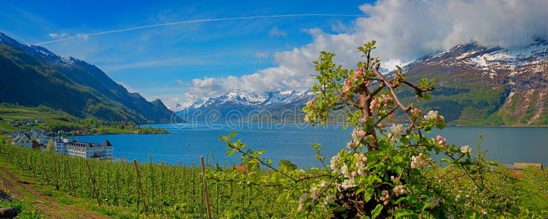härlig norway för liggande för fiordhardangerfjordhordaland region arkivfoton