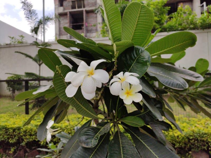 Härlig ny gul blomma i grön bladbakgrund royaltyfri fotografi