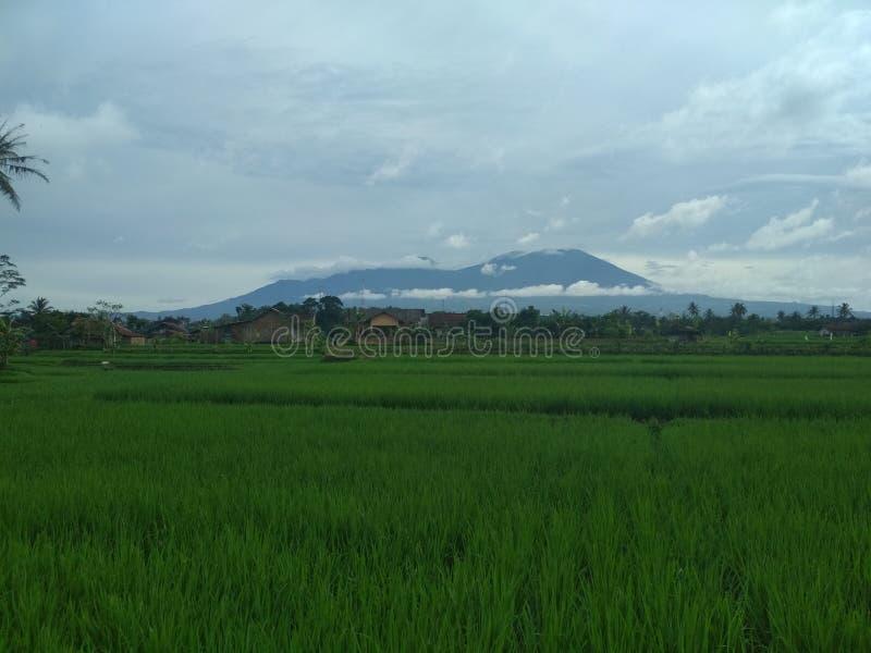 Härlig och kall indonesisk natur arkivfoton