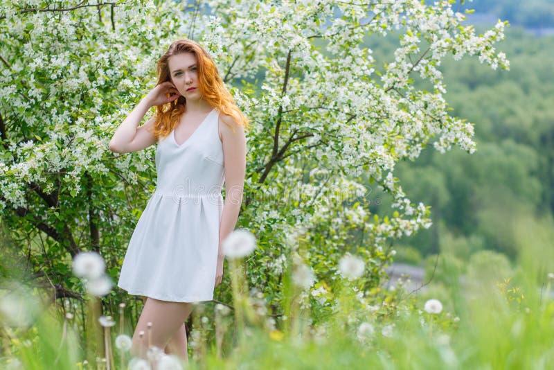 Härlig och ung flickaanseende bredvid ett blommande Apple träd i en vit klänning Röda kanter av flickan royaltyfri fotografi