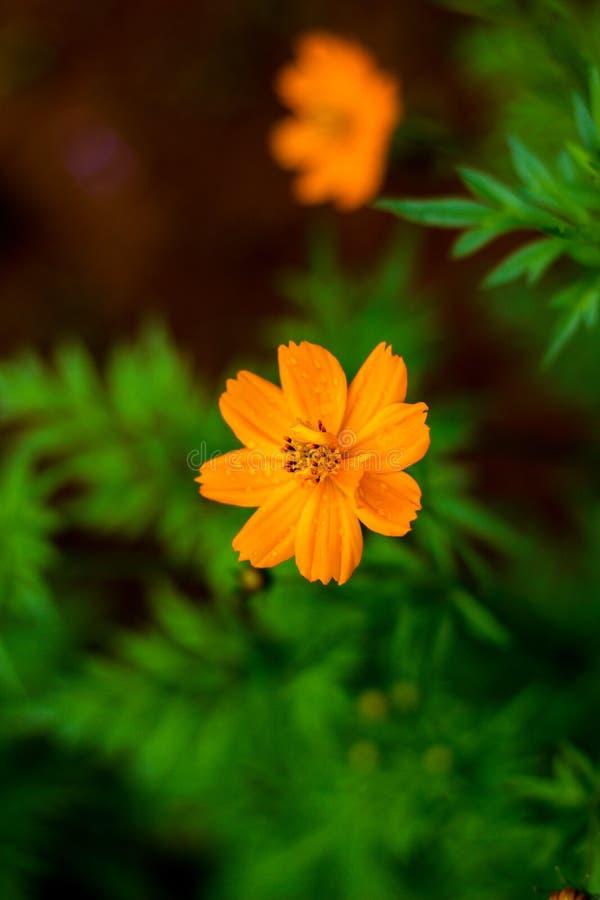 Härlig orange blomma med en grön bakgrund arkivfoton