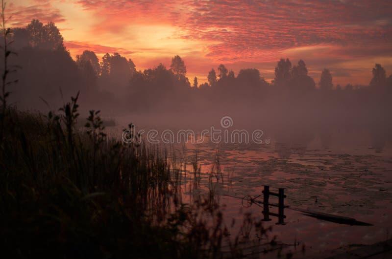 Härlig orange rosa himmel över den fridsamma sjön Dimmig höstsoluppgång Trädkontur, tyst skog för ensam skeppsdocka, träsk royaltyfri bild
