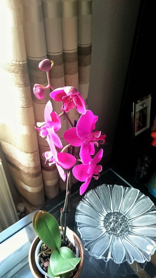 härlig orchid arkivfoton