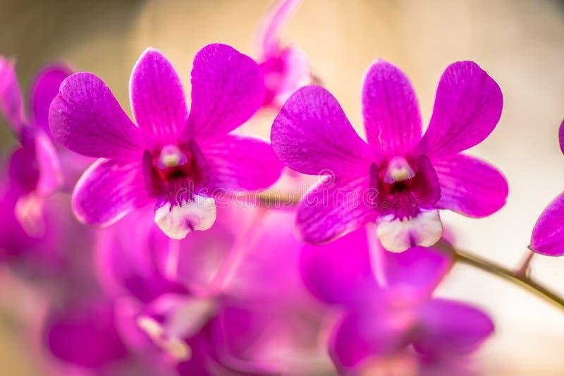 Härlig orchid2 royaltyfri foto