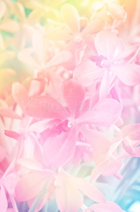 Härlig orkidéblomma för mjuk fokus royaltyfri foto