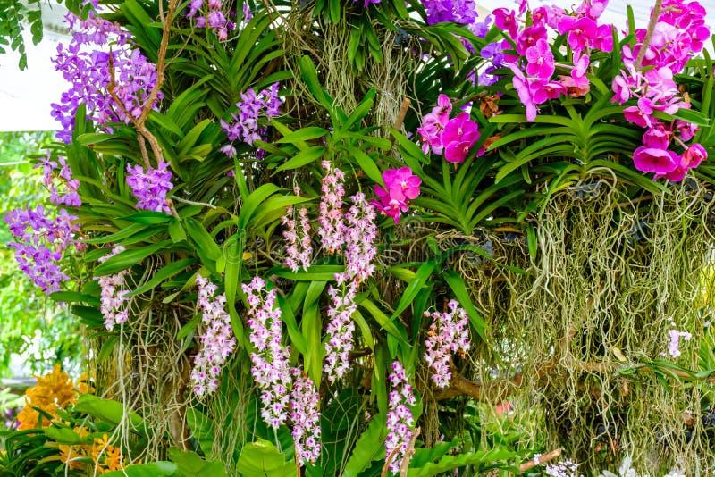 Härlig orkidéblomma och gräsplansidabakgrund i garden fotografering för bildbyråer