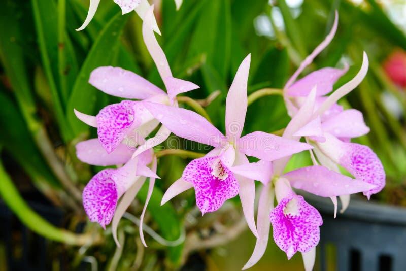 Härlig orkidéblomma och gräsplansidabakgrund i garden royaltyfria bilder