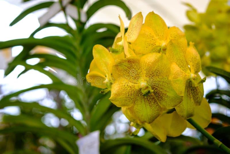 Härlig orkidéblomma och gräsplansidabakgrund i garden royaltyfria foton