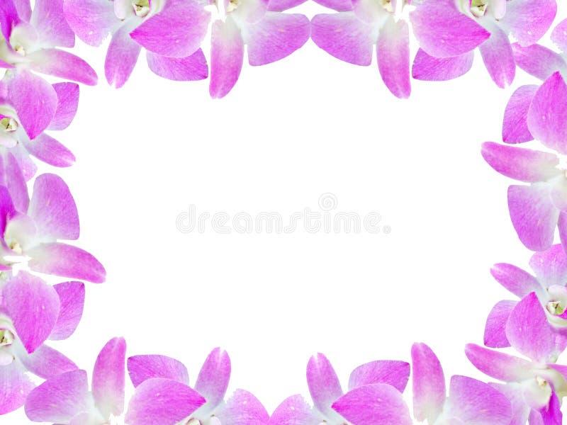 Härlig orkidéblommaram som isoleras på vit bakgrund för hälsningkort eller din design arkivfoton