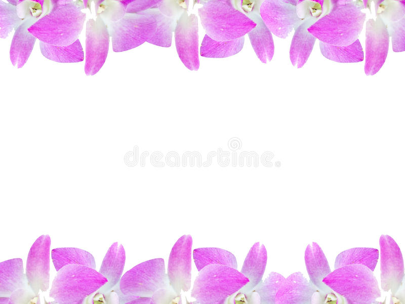 Härlig orkidéblommaram som isoleras på vit bakgrund för hälsningkort eller din design arkivbild