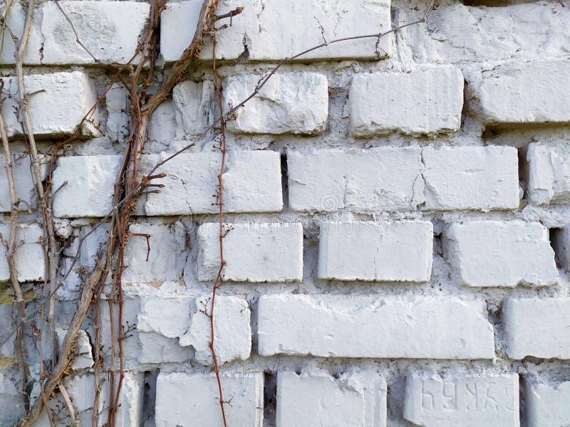 Härlig ovanlig sten för bakgrundstexturtegelsten royaltyfria foton
